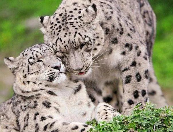 Вымирающие виды животных мира по вине человека. Сохранение животных 1ee4b6e0aaa9e