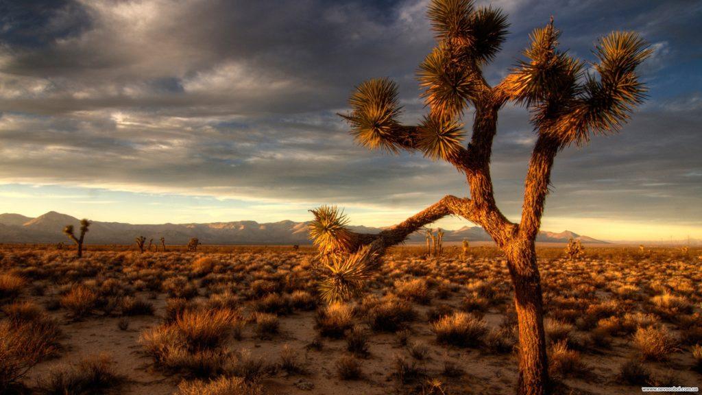 Природные зоны России пустыни и полупустыни