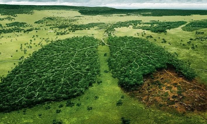 Глобальная вырубка леса