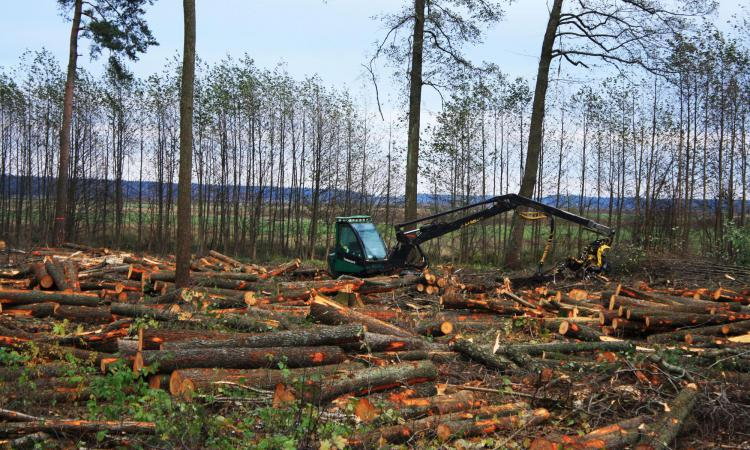 Экология в россии эссе 3788