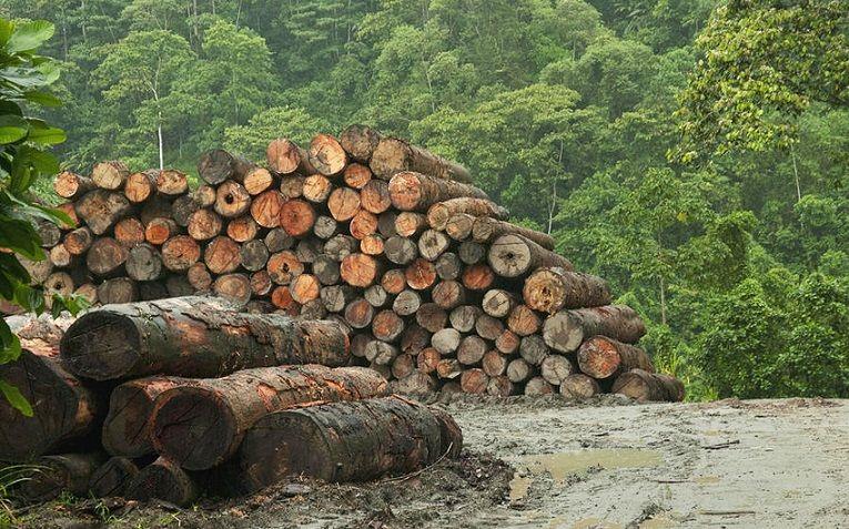 Заготовка лесов