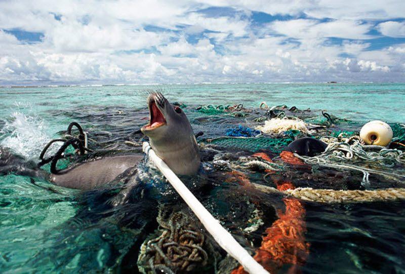 виды загрязнений мирового океана
