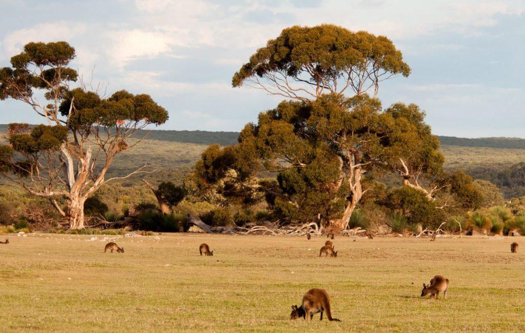Разнообразный климат Австралии