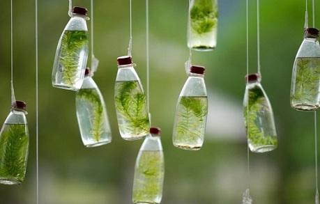Жизнь в бутылках