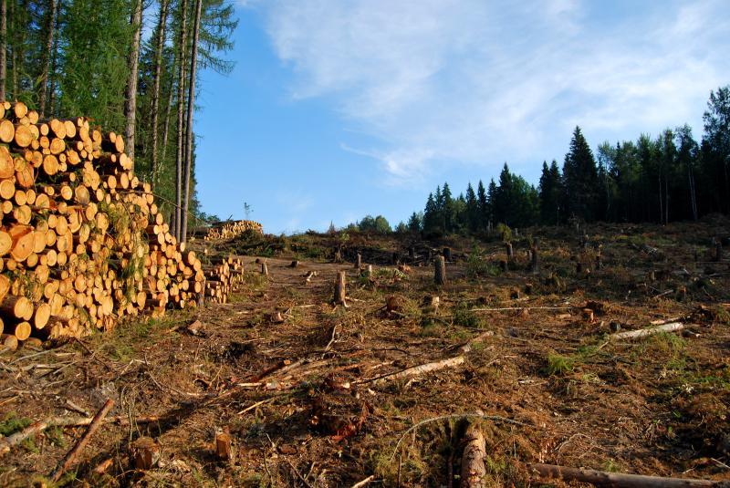 Проблемы смешанных лесов
