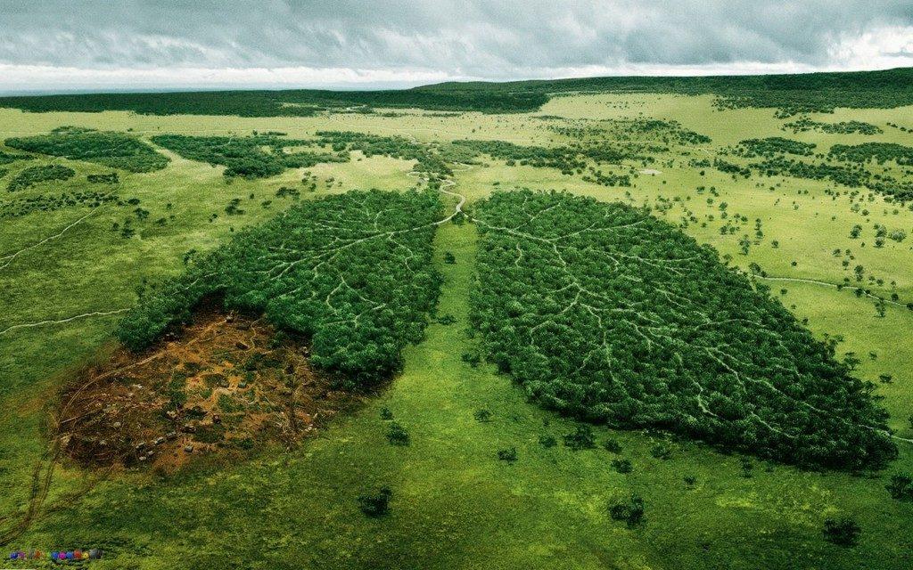 Экологические проблемы смешанных лесов