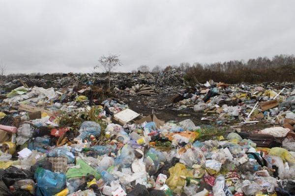 Экология Новосибирска