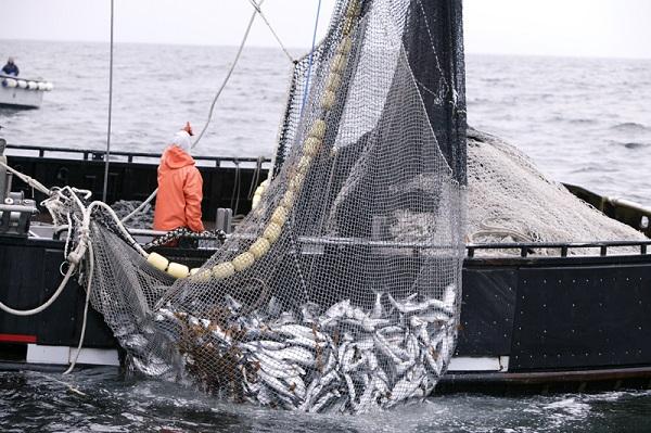 Вылов рыбы в океане