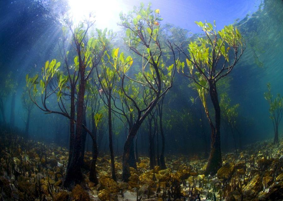 Новый мангровый лес