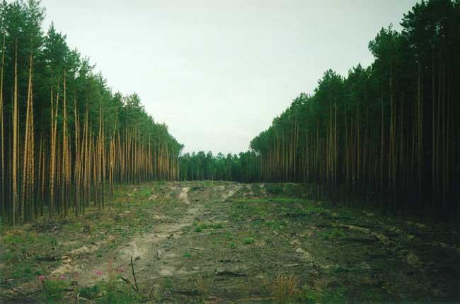 Вымирание лесов
