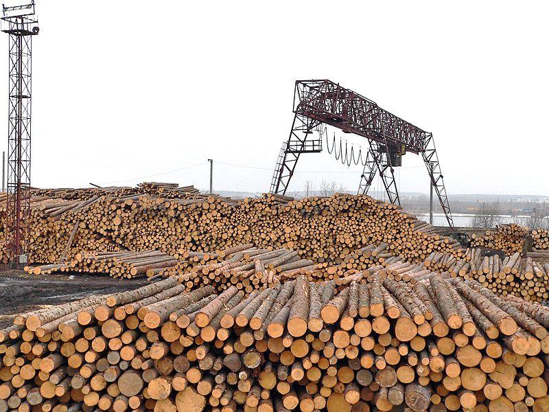Заготовки лесов