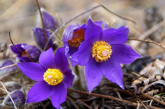 Цветы в Сибире