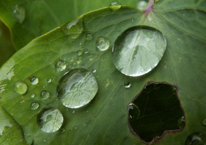 Кислотный дождь-разрушение природы