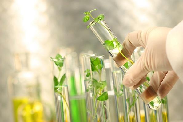 Растения спасут человечество