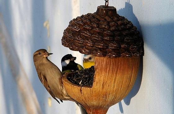 Пернатые птицы