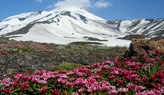 Цветение на Камчатки