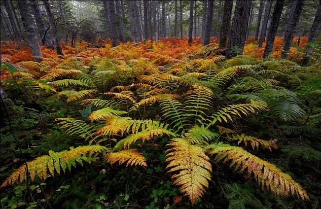 Растительный мир Сахалина