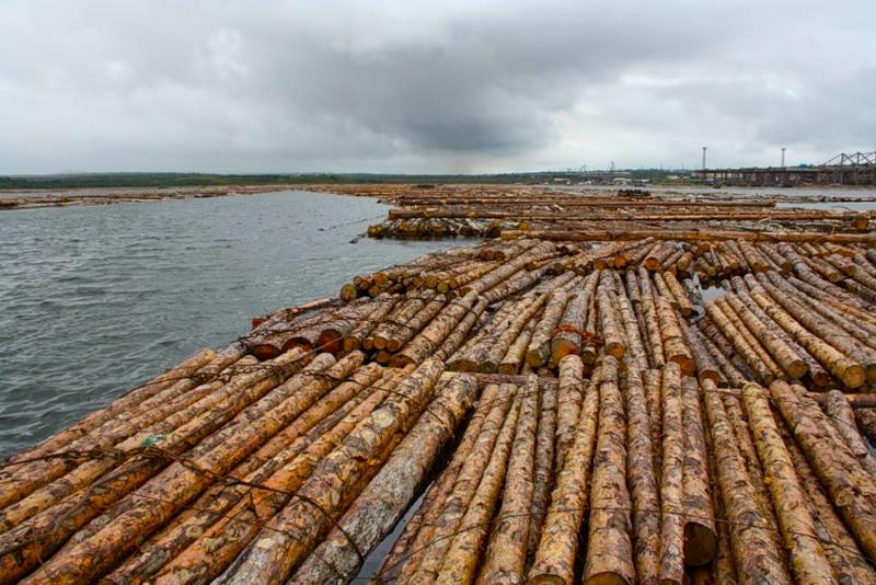Загрязнение древесиной