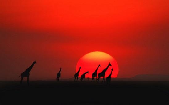Масаи Мара - национальный парк в Африке