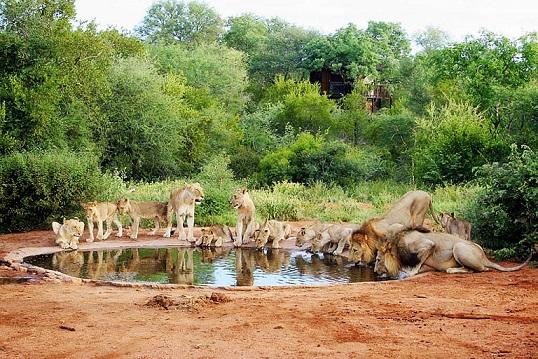 Национальный парк Африки