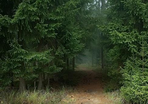 Елово-сосновый лес