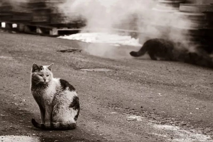 Бездомная кошка