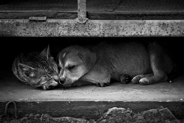 Вместе живут бездомные животные