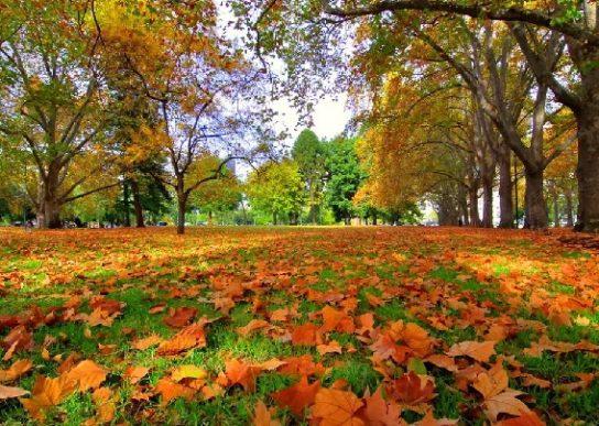 почему листья опадают