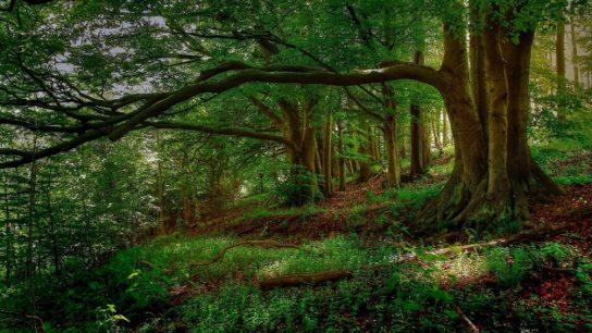 Сообщение на тему охрана лесов