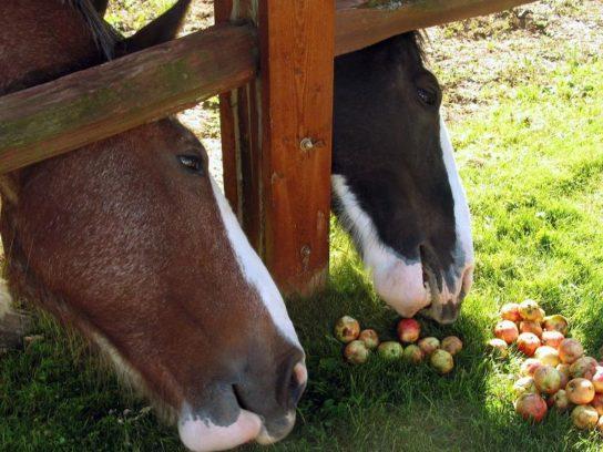 чем питаются лошади