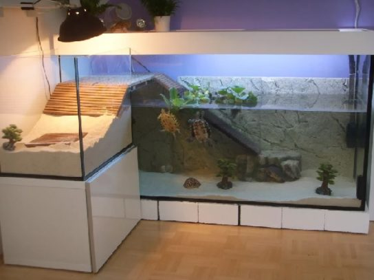 Пример террариума для красноухой черепахи
