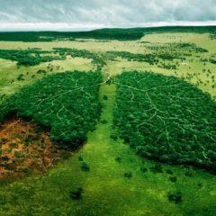 Экологические проблемы леса