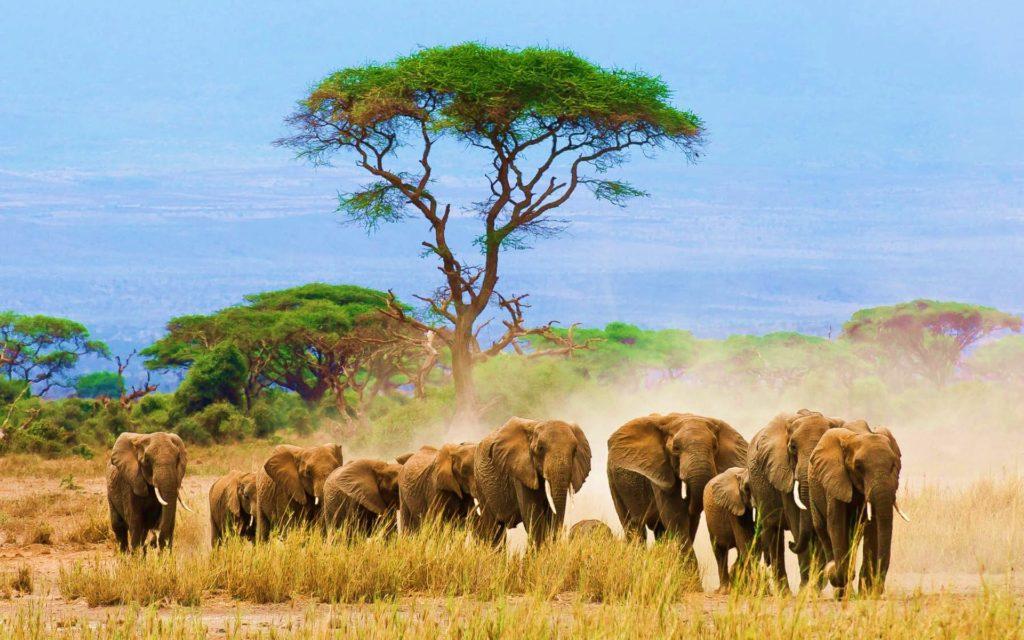Климат в Африке