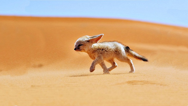 animals-of-desert