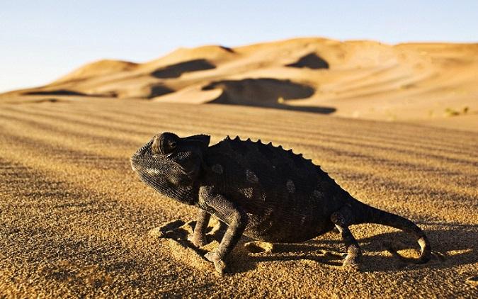 Животные пустыни и полупустыни
