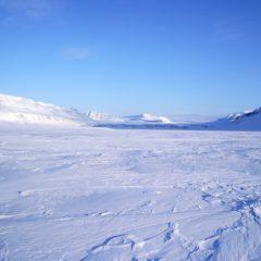 арктические пустыни проблемы