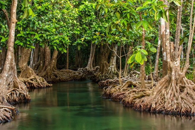 Красота мангровых лесов