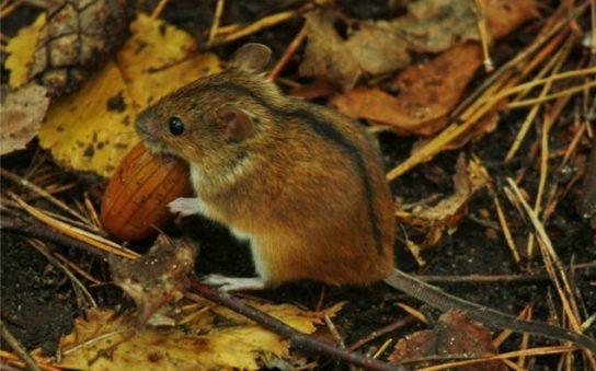 чем питаются мыши - фото 1