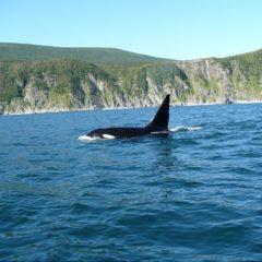 проблемы охотского моря