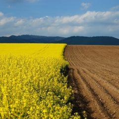 сельскохозяйственная экология