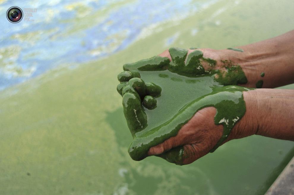 Биологическое загрязнение среды
