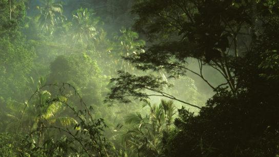 Экваториальные леса Африки - фото 2