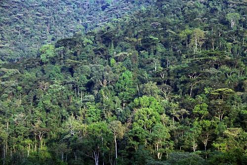 ekvatorialnie-lesa-afriki