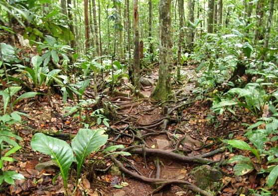 pochva-ekvatorialnih-lesov