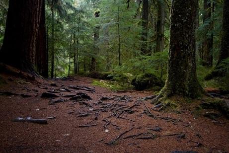 pochva-smeshanih-lesov