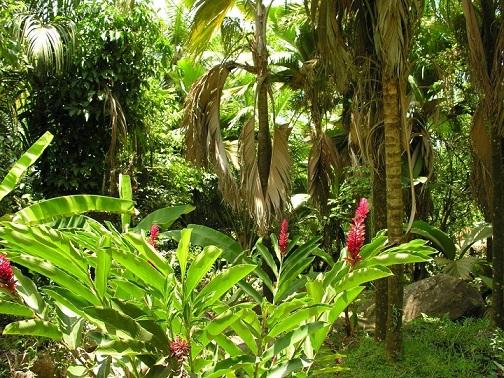 rasteniya-ekvatorialnogo-lesa