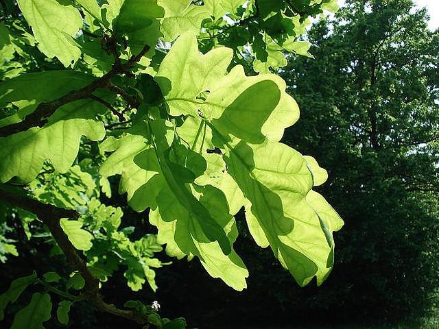rasteniya-shirokolistvennih-lesov