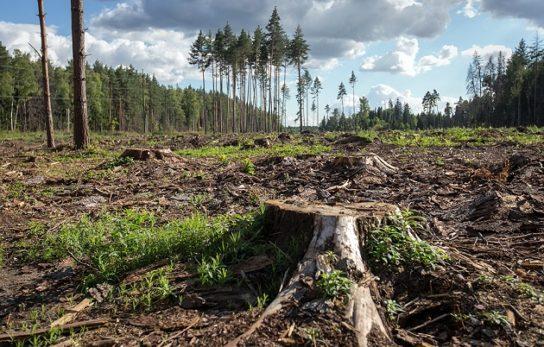 Эссе вырубка лесов аргументы за и против 4547