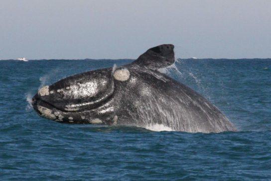 фото японского кита