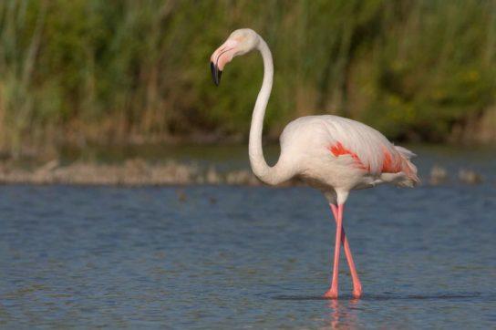 flamingo-544x362.jpg